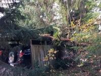 2017-10-29-TH-Mehrere-Bäume-auf-Carport-Asendorf